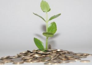 Einnahmen Geld Münzen grüne Pflanze