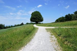 Weg Gabelung Landschaft Baum Zukunft wählen